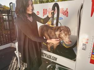 Pet-Wash-Dry